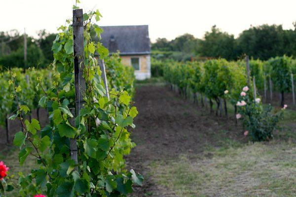 market and vineyard tour