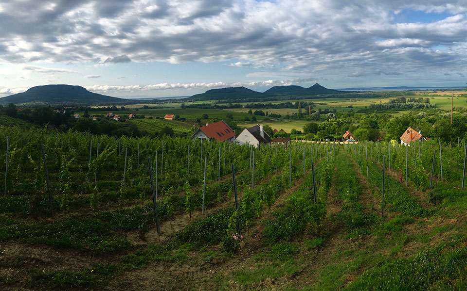 hungarian wine tours